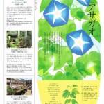 SULUS 2014.05 グリーンカーテン-8